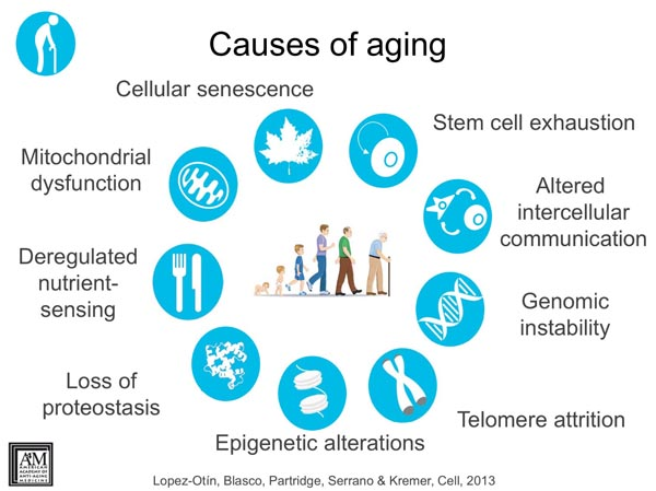causes of aging