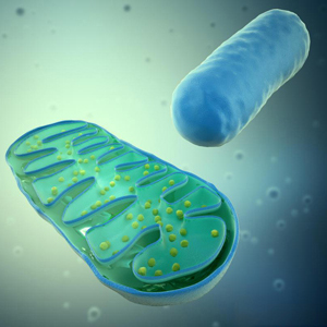 neurological health and mitochondria